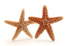 Pares aislados de las estrellas de mar fotos de archivo