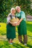 Pares alegres que sostienen la cesta de la manzana Imagenes de archivo