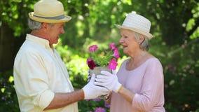 Pares aposentados bonitos que beijam ao jardinar vídeos de arquivo