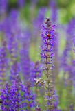 Pares asombrosos: una abeja y la mariquita Fotografía de archivo libre de regalías