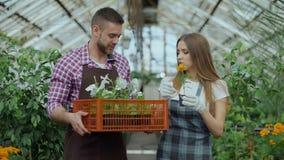 Pares atractivos jovenes de los floristas en el delantal que trabaja en invernadero Hombre alegre que camina con la caja de flore metrajes