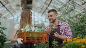 Pares atractivos jovenes de los floristas en el delantal que trabaja en invernadero Mujer alegre que camina con la caja de flores almacen de metraje de vídeo