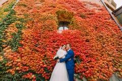 Pares bonitos elegantes do casamento, noivos que levantam no parque perto da parede com a planta vermelha do rastejamento Imagens de Stock Royalty Free