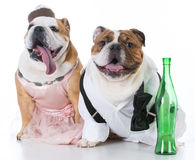 pares borrachos del perro imagenes de archivo