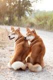 Pares cariñosos del perro de la silueta Fotos de archivo