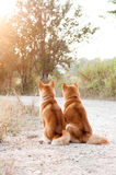 Pares cariñosos del perro de la silueta Imagen de archivo libre de regalías
