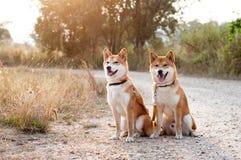 Pares cariñosos del perro de la silueta Fotos de archivo libres de regalías