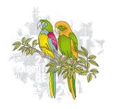Pares coloridos do vetor de papagaios no branche Fotos de Stock Royalty Free