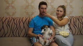 Pares com o cão que olha a tevê Pares felizes vídeos de arquivo