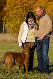 Pares con el perro en parque soleado del otoño Foto de archivo