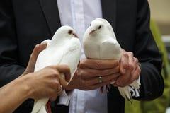 Pares con las palomas de la boda, 2016 Fotos de archivo libres de regalías