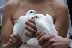 Pares con las palomas de la boda, 2016 Fotografía de archivo