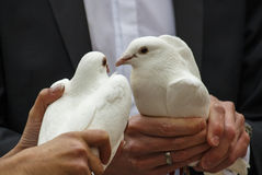 Pares con las palomas de la boda, 2016 Imagen de archivo libre de regalías