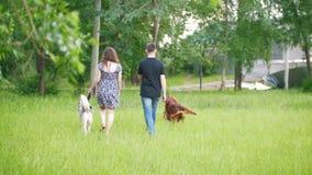 Pares con los animales domésticos que caminan en parque - el hombre y la mujer camina con el setter irlandés y el perro esquimal metrajes