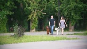 Pares con los animales domésticos que caminan en parque - el hombre y la mujer camina con el setter irlandés y el perro esquimal almacen de video