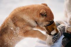 Pares con un perro en bosque del invierno Fotografía de archivo libre de regalías