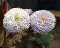 Pares da flor fotos de stock royalty free