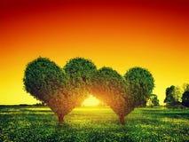 Pares das árvores da forma do coração na grama no por do sol Amor
