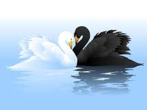Pares das cisnes brancas e pretas Fotografia de Stock Royalty Free