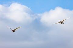 Pares das cisnes do voo abaixo quando nuvem Imagem de Stock Royalty Free