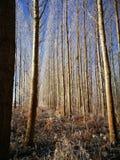 Pares de árboles Fotos de archivo