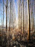 Pares de árboles Imágenes de archivo libres de regalías