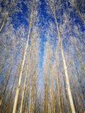 Pares de árboles Imagen de archivo