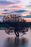 Pares de árboles en el lago de Sevan Imagen de archivo libre de regalías
