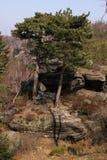 Pares de árboles en la piedra Foto de archivo libre de regalías