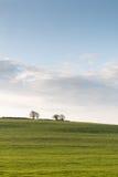 Pares de árboles en un pasto verde Imagenes de archivo