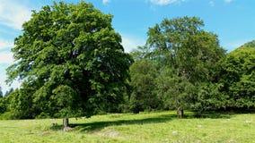 Pares de árvores Imagens de Stock Royalty Free