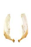 Pares de alas Fotografía de archivo