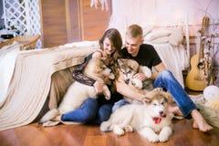 Pares de amor novos alegres que sentam-se no quarto ao expressar o amor com cachorrinhos foto de stock