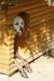 Pares de animales en perrera Imagen de archivo libre de regalías