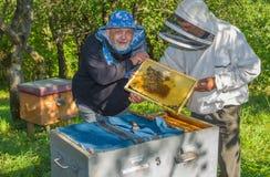 Pares de apicultores ucranianos en el lugar de trabajo Fotos de archivo