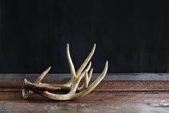 Pares de astas reales de los ciervos Fotos de archivo