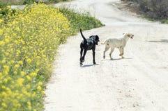 Pares de cães que andam perto das flores Fotografia de Stock Royalty Free