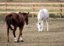 Pares de caballos Imágenes de archivo libres de regalías