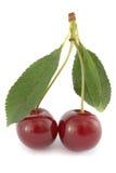 Pares de cerejas ácidas maduras Fotografia de Stock