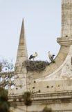 Pares de cigüeñas Foto de archivo libre de regalías