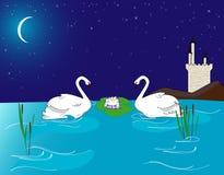 Pares de cisnes bonitas no lago na meia-noite Fotos de Stock