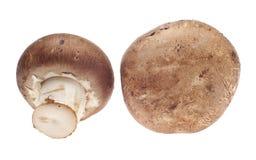 Pares de cogumelos Fotografia de Stock Royalty Free