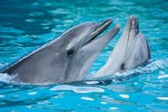 Pares de delfínes Foto de archivo libre de regalías
