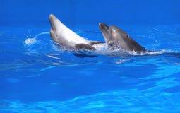 Pares de delfínes Imagen de archivo libre de regalías