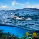 Pares de delfínes que nadan en onda fotos de archivo