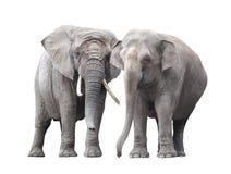 Pares de elefantes Imágenes de archivo libres de regalías