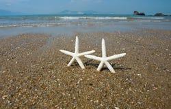 Pares de estrellas de mar foto de archivo