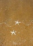 Pares de estrellas de mar imagen de archivo