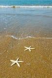 Pares de estrellas de mar fotografía de archivo