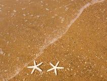 Pares de estrellas de mar fotos de archivo
